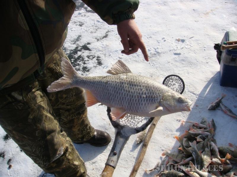 чем и какими снастями рыбачат на байкале